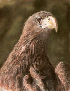 The White-tiled Eagle, soft pastels 30x40 cm