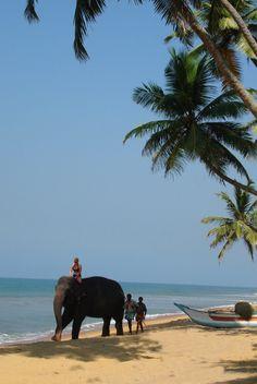 Local Taxi: The Ultimate Tropical Beach at Sri Lanka