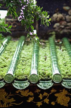 Travel Asian Architecture green rooftop - you could make the cylinders a type of watering device Japan Kultur, Asian Architecture, Rain Collection, Roof Detail, Art Japonais, Vinyasa Yoga, Japanese House, Japanese Beauty, Japanese Gardens