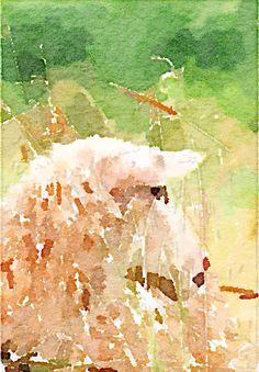 Watercolor of sheep by Lisa Sims
