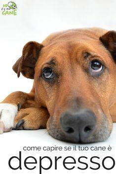 Hai paura che il tuo cane sia depresso? Vediamo come capirlo