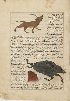 Arts of the Islamic World | Folio from <i>Aja'ib al-makhluqat</i> (Wonders of Creation) by al-Qazvini; recto: Harish/Unicorn (Harish), Wild Pig (Khanzir); verso: Bear (dubb) | F1954.90