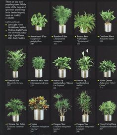 indoor plants for an office
