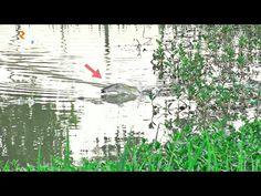 NIAT MANCING GABUS BABON MALAH KETEMU BONCEL REUNIAN - YouTube Fishing Videos, Youtube, Painting, Art, Art Background, Painting Art, Kunst, Paintings, Performing Arts
