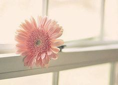 Gerbera, Pretty, Plants, Pictures, Photos, Flora, Plant, Drawings