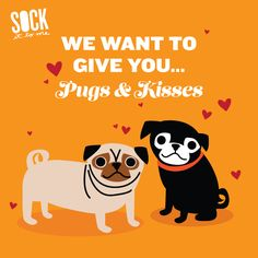 These cute dogs want to give you pugs and kisses!