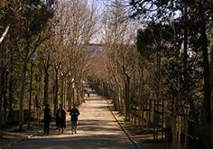 Parque La Quinta de los Molinos LA QUINTA DE LOS MOLINOS En el barrio del Salvador del distrito de San Blas se encuentra este jardín municipal desconocido por muchos pero considerado Parque Histórico y Bien de Interés