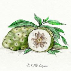 """Noni is a fruit (Botanical name: Morinda Citrifolia) native to the South Pacific Islands. It is a powerful antioxidant and Miranda has been drinking it since the age of twelve. It's one of Miranda's """"not so secret"""" beauty secrets! It's also a key ingredient in the KORA Organics range and it contains more than 170 Vitamins and Minerals alone. www.koraorganics.com"""