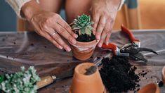 4 razones por las que no crece tu suculenta Cactus Y Suculentas, Cacti And Succulents, Ale, Exterior, Gardening, Ideas, Gardens, Flower Gardening, Propagating Succulents