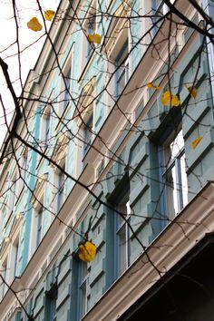The last autumn leaves, Helsinki.