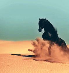 Friesian horse galloping through that sand!