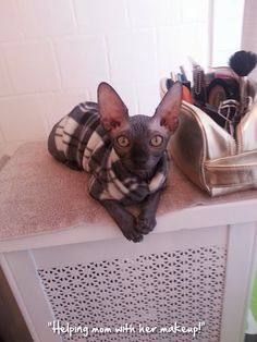 Admin's Soup of the Day! 12.1.14 http://sphynxlair.com/community/threads/admins-soup-of-the-day-12-2-14.29742/ #sphynx #sphynxcat #sphynxlair
