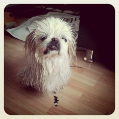 Spudgy just had a shower. Oh doesn't he look so happy?! by simonandmartina (EYK, Eat Your Kimchi), via Flickr