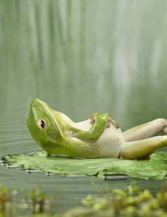 I would be relaxing on my lily pad too