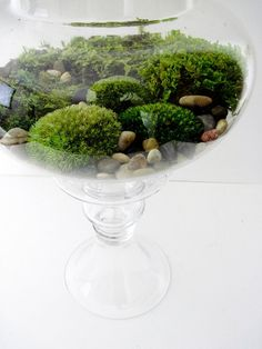 Today we look at ways to make your very own unforgettable bonsai terrarium plants. The picture Bonsai Terrarium plant here offers you a sense of the scale, and we're sure you want to have it for your home decor. Terrarium Jar, Hanging Terrarium, Terrarium Plants, Succulent Terrarium, Terrarium Ideas, Moss Garden, Garden Art, Garden Plants, Garden Ideas