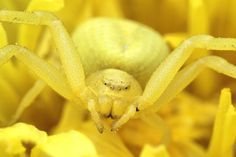 Yellow Peril by Chris Atkinson on 500px