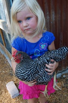 Little girl and a chicken...I remember the feel of a live chicken in my arms....:)