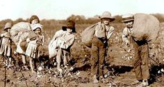 Ireland slavery historyDuring the over Irish children aged 10 to 14 were taken from their parents and sold as slaves in the West Indies, Virginia and New England. In this decade, Irish (mostly women and children) were sold to Barbado Old Pictures, Old Photos, Vintage Photos, Picking Cotton, Cotton Fields, Irish Men, One In A Million, American History, The Past