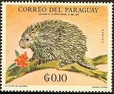 Porcupine. Stamp from Paraguay, circa 1969