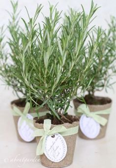 55 Easy & Unique Baby Shower Favor ideas for every budget # designideas . - 55 Easy & Unique Baby Shower Favor Ideas for Every Budget # designideas - Unique Baby Shower Favors, Baby Shower Prizes, Baby Boy Shower, Baby Shower Gifts, Baby Showers, Rehearsal Dinner Favors, Rehearsal Dinner Decorations, Wedding Rehearsal, Rehearsal Dinners