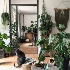 Bisou Bisou La Jungle 🌴 Jungle Bedroom, Room With Plants, Home Living, Living Area, Interior Plants, Indoor Garden, Indoor Plants, Diy Home, Plant Decor