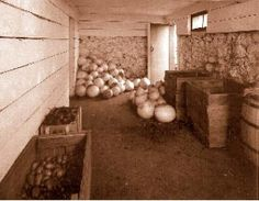 How to store vegetables and fruit in a root cellar.