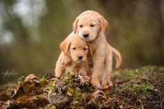 Puppy Love by Kerstin Benz  on 500px