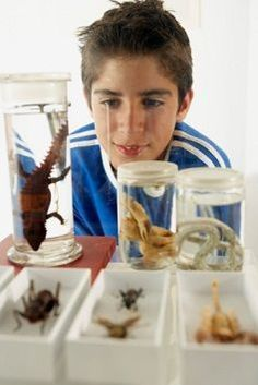 How to Preserve Insects for Display- directions for using resin or acrylic to encase insects