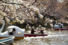 22 Best Hanami Spots in Tokyo
