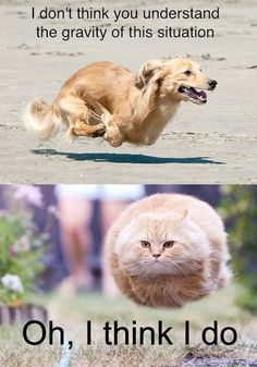 Funny Dog And Cat Running From The Gravity Of The Situation - Funny Animal Pictures With Captions - Very Funny Cats - Cute Kitty Cat - Wild Animals - Dogs
