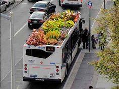 Трава на крыше автобуса