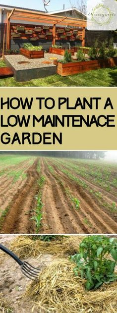 How to Plant a Low Maintenace Garden