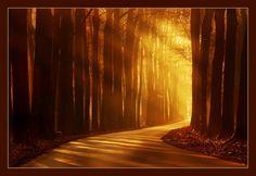 Orange path to heaven