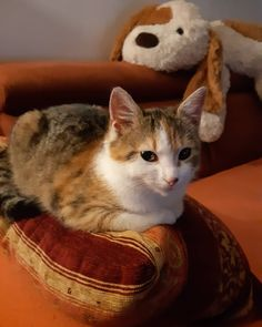 Páči sa mi to: 2, komentáre: 0 – @maja_09080 na Instagrame Emoji, Cats, Animals, Gatos, Animales, Animaux, The Emoji, Animal, Cat