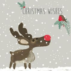Marie Curie Charity Christmas Card Pack - 'Reindeer and Robin'
