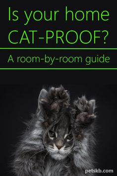 How To Cat-Proof Your Home - Are you wondering exactly what cat-proofing a home entails? We've had to d this for many years and have compiled this room-by-room guide of everything you need to consider Cat Care Tips, Dog Care, Cat Bedroom, Bedroom Decor, Getting A Kitten, Outdoor Cat Enclosure, How To Cat, Cat Hug, Cat Info
