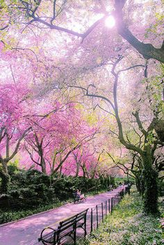 Spring in Conservatory Garden, Central Park, New York City