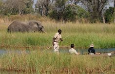 Fabulous Mokoro experience in the Okavango Delta, with guided excursions from Moremi Crossing safari camp. Book your next safari today Chobe National Park, National Parks, Vintage Safari, All Inclusive Trips, Travel Center, Destinations, Okavango Delta, Hotel Packages, Savannah
