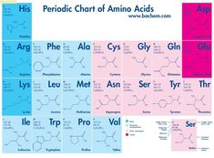 amino acids chart - Google Search
