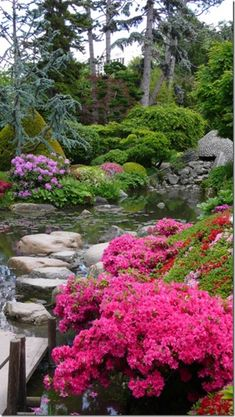 Spruce and conifers (blue spruce, blk hills, hemlocks) with Japanese maples, rhodadendrons and azaleas Garden Landscape Design, Garden Landscaping, Amazing Gardens, Beautiful Gardens, Japanese Garden Plants, Garden Waterfall, Outdoor Pictures, Water Features In The Garden, Ponds Backyard