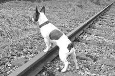 Wo bleibt die Bahn??????