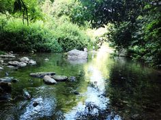 """נחל כזיב (צילום: יח""""צ, צילום: איל שפירא) River, Israel, Nature, Outdoor, Outdoors, Naturaleza, Outdoor Games, Nature Illustration, The Great Outdoors"""