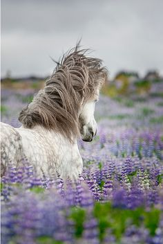 Horse in wildflower meadow by eythor via flickr