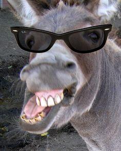 #Donkey in #wayfarers