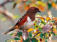 Charles Fonseca: Pássaro vermelho