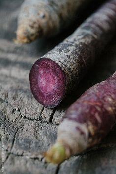 Purple Carrots by Alberto Bogo