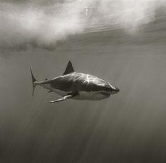 Happy #SharkWeek. Chomp chomp.
