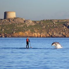 Bottlenose dolphin playing with a paddle boarder in front of Dalkey Island, Ireland Dublin Ireland, Ireland Travel, Stuff To Do, Things To Do, Bottlenose Dolphin, Ireland Homes, Adventure Is Out There, New Pictures, Dolphins