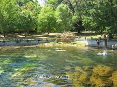 Salt Springs, Ocala National Forest....before the wall was replaced