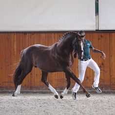 Don Hill (Don Gregory-Hill Hawk) Hanoverian stallion #HTFstallions